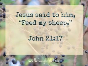 Feed my sheep_Bible teachers